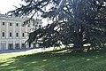 Villa Olmo - Cedro del Libano - parco della villa.jpg