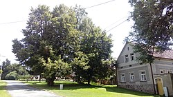 Village green in Horní Valdorf (02).jpg