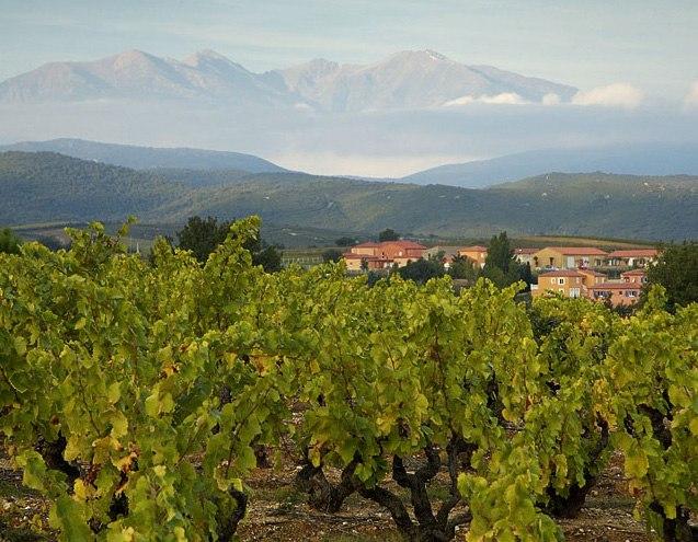 Vinepyrennees crop