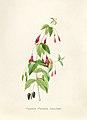 Vintage Flower illustration by Pierre-Joseph Redouté, digitally enhanced by rawpixel 17.jpg