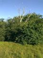 Vlakte van Waalsdorp (Waalsdorpervlakte) 2016-08-10 img. 522.png