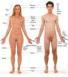 Sexe Videp sexe muscle