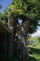 WO 69 Linde Rabensteiner 02.jpg