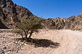 Wadi Gnai 2020-03-08-1.jpg