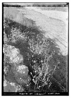 Wady Shaih, T-J (i.e., Transjordan) LOC matpc.10228.jpg