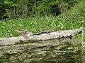 Wakulla-springs 2009-05-04T19 12 53.jpg