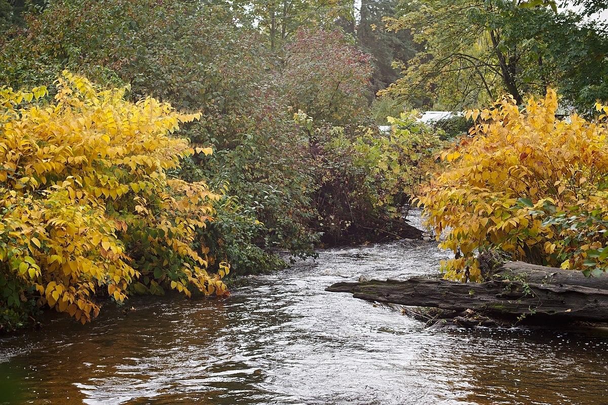 Swamp Creek Washington Wikipedia