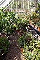 Walled garden greenhouse at Myddelton House, Enfield, London, England 04.jpg