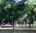 Walnut Grove at MTSU.jpg