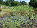 Warsaw. Powsin. Botanical Garden 171.JPG