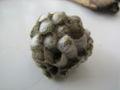 Wasp nest 03.JPG