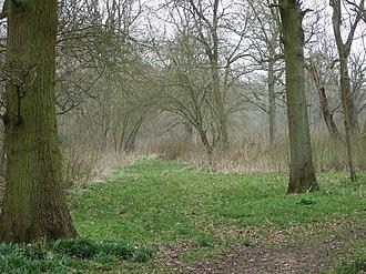 Wayland Wood - Image: Wayland Wood, early Spring. geograph.org.uk 754598