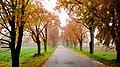 Weg zum Dorf - Herbst 2013 - panoramio (1).jpg