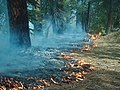 West Kern wildfire used for resource benefit, Sequoia and Kings Canyon National Parks, summer 2003 (5beec0c0-0b4e-4f9e-9e48-f24044926c52).jpg
