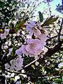 White Flowers JD.jpg