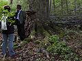Wien-Hietzing - Naturdenkmal 478 - Führung im Urwald am Johannser Kogel.jpg
