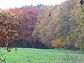 Wiese bei Dreischen - geo.hlipp.de - 15196.jpg