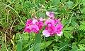 Wild flowers 4a.jpg