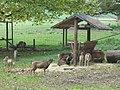 Wildgehege bei Trier (Wild Animal Enclosure by Trier) - geo.hlipp.de - 14560.jpg