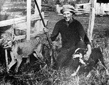 thylacine wikipedia