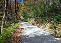 Winding-autumn-country-road - Virginia - ForestWander.jpg