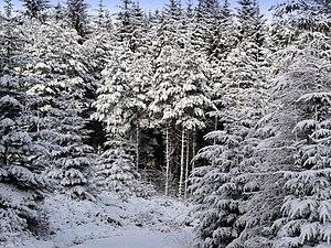 English: Winter wonderland