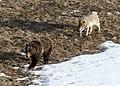 Wolfbear.jpg