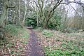 Woodland footpath - geograph.org.uk - 762608.jpg