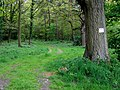 Woodland track near Chesterton, Shropshire - geograph.org.uk - 1302280.jpg