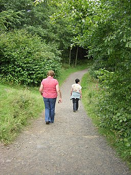 Woodland walk, Dean Castle Country Park - geograph.org.uk - 1444450