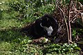 Wraxall 2012 MMB 15 Smudge.jpg