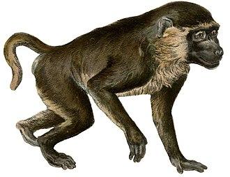 Outline of biology - 200Mya<br>Mammals