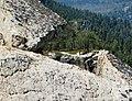 Yosemite National Park (juniorvelo) 03.jpg