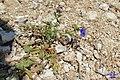 Zakynthos flora (35092982293).jpg