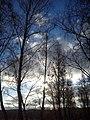 Zimowe niebo w Borkowie - panoramio.jpg