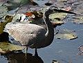 (1)Heron-4aa.jpg