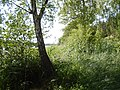 +20180611Müritz-Nationalpark.Feisneck See.-023.jpg