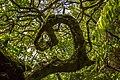 Árvore da Vida, Terceira - Açores.jpg