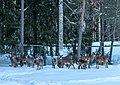 Ähtäri Zoo, Finland (39247408070).jpg