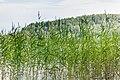 Öresjön - panoramio (3).jpg