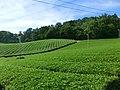 Ōmi Tea garden, Mushouno, Minakuchi 02.jpg