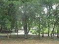 Андріївка-центральний сквер.JPG