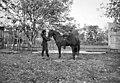 Батум. Грузин и гурийский милиционер. Фотопленки Поля Надара (1890).jpg