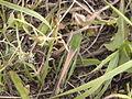 В траве.JPG