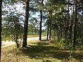 Гольцово - panoramio.jpg