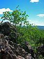 Г. Петровская - panoramio - Oleg Seliverstov (1).jpg