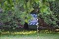 Дерева дерену Святослава Ярославича DSC 0415.jpg