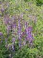 Донецкий ботанический сад 023.jpg