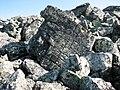 Камень в клеточку на склоне Вогульской Сопки - panoramio.jpg