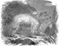 Медведь (БЭАН).png